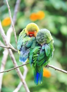 birds-sleeping.jpg